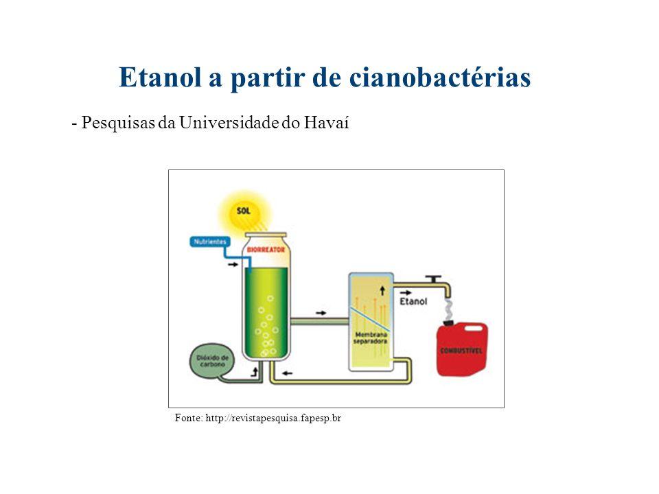 Etanol a partir de cianobactérias