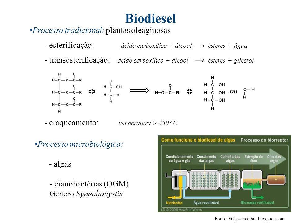 Biodiesel Processo tradicional: plantas oleaginosas