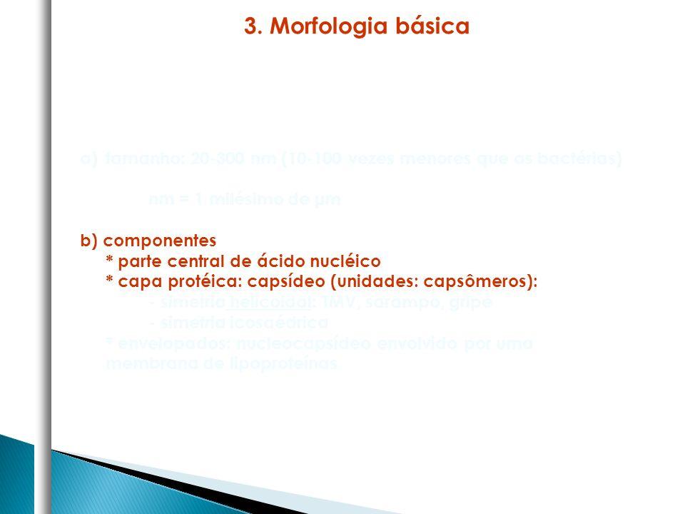 3. Morfologia básica tamanho: 20-300 nm (10-100 vezes menores que as bactérias) nm = 1 milésimo de μm.