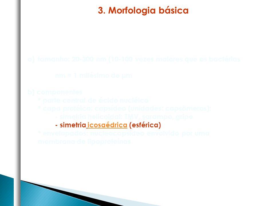 3. Morfologia básica tamanho: 20-300 nm (10-100 vezes maiores que as bactérias. nm = 1 milésimo de μm.
