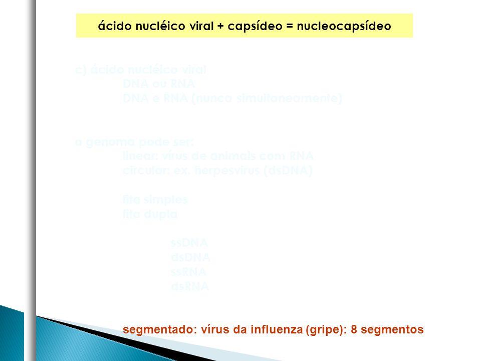 ácido nucléico viral + capsídeo = nucleocapsídeo