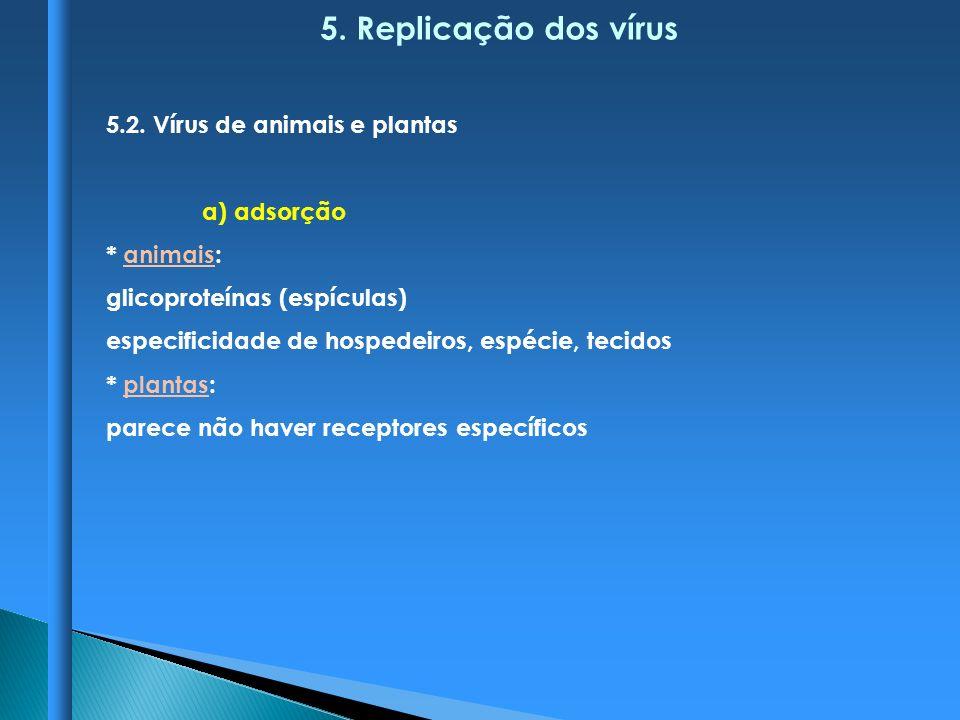 5. Replicação dos vírus 5.2. Vírus de animais e plantas a) adsorção