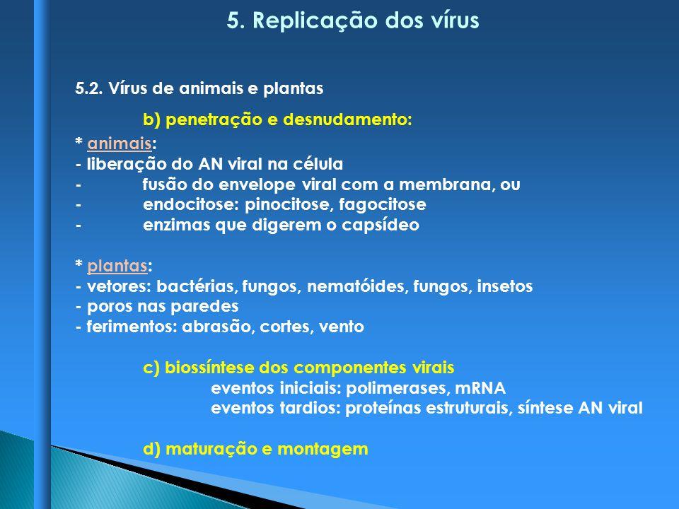 5. Replicação dos vírus 5.2. Vírus de animais e plantas
