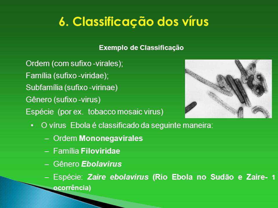 6. Classificação dos vírus Exemplo de Classificação