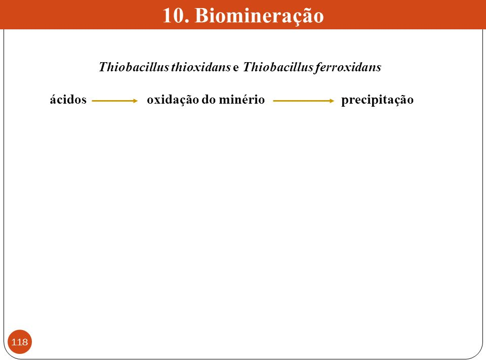 10. Biomineração Thiobacillus thioxidans e Thiobacillus ferroxidans