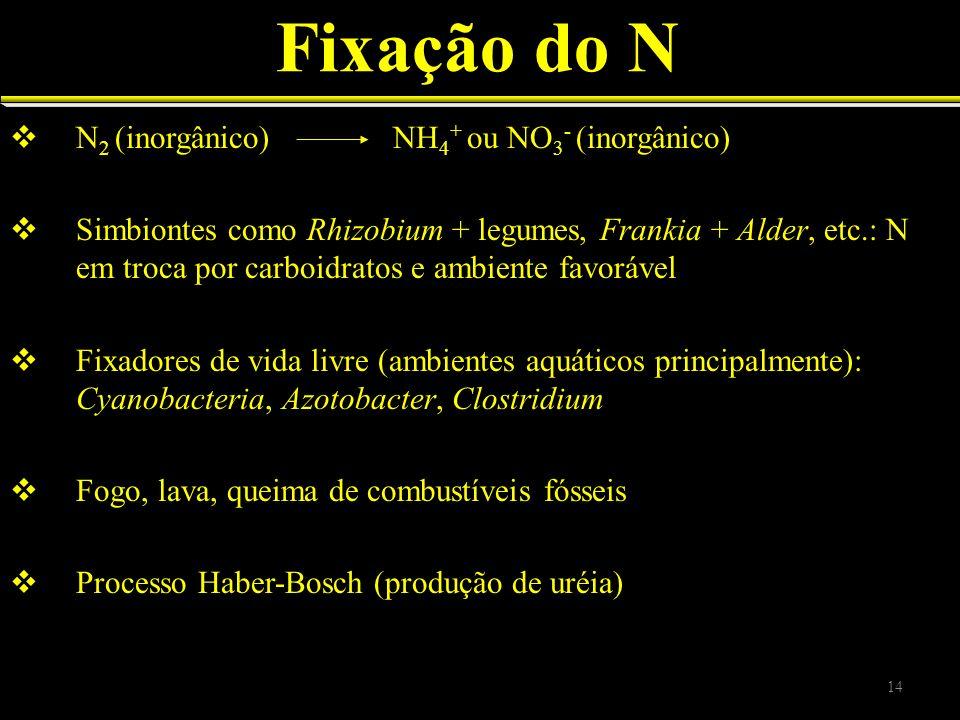 Fixação do N N2 (inorgânico) NH4+ ou NO3- (inorgânico)