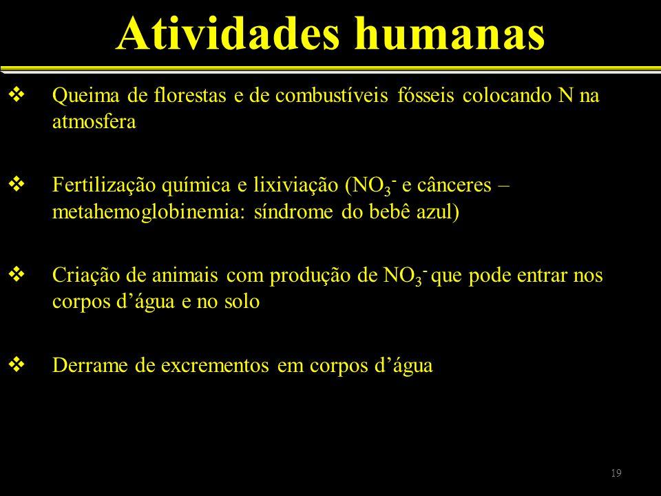 Atividades humanas Queima de florestas e de combustíveis fósseis colocando N na atmosfera.