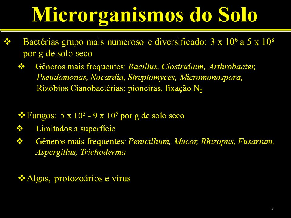Microrganismos do Solo