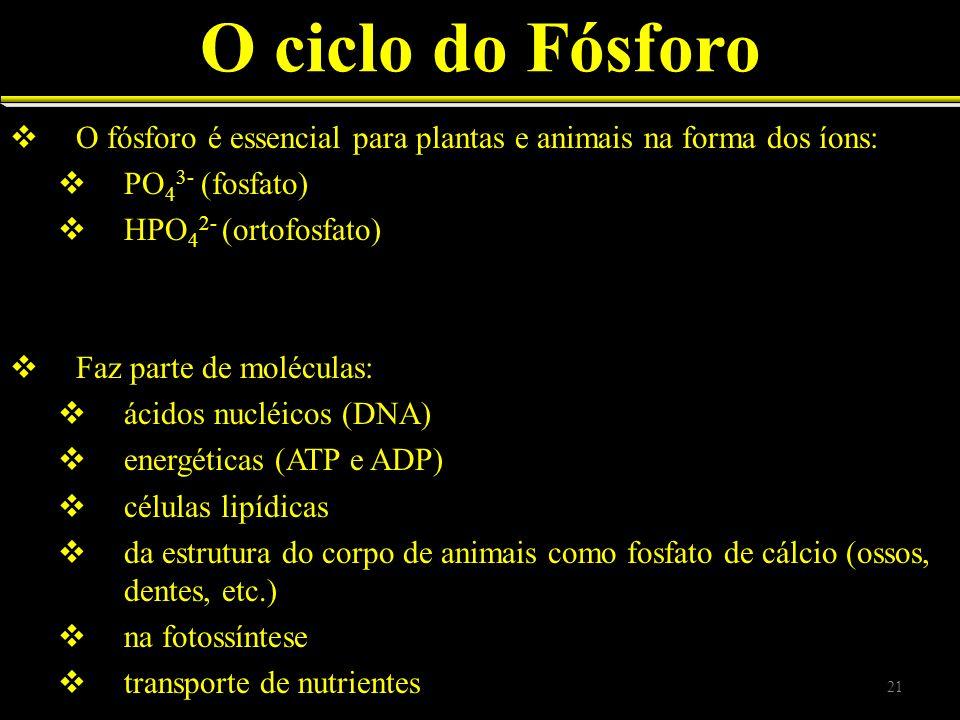 O ciclo do Fósforo O fósforo é essencial para plantas e animais na forma dos íons: PO43- (fosfato)