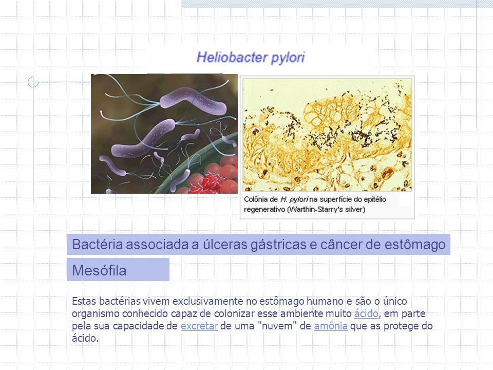 Mesófila Bactéria associada a úlceras gástricas e câncer de estômago