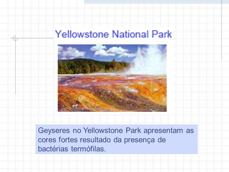 Geyseres no Yellowstone Park apresentam as cores fortes resultado da presença de bactérias termófilas.