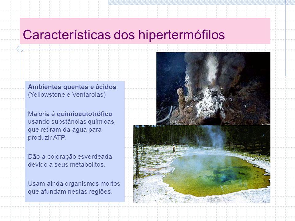 Características dos hipertermófilos