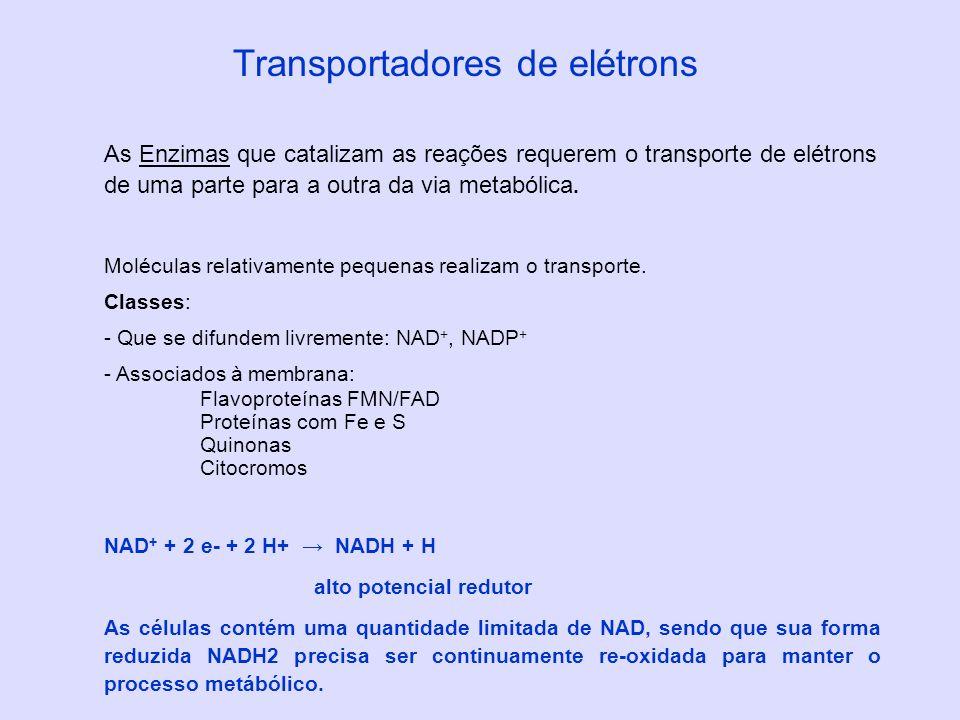 Transportadores de elétrons