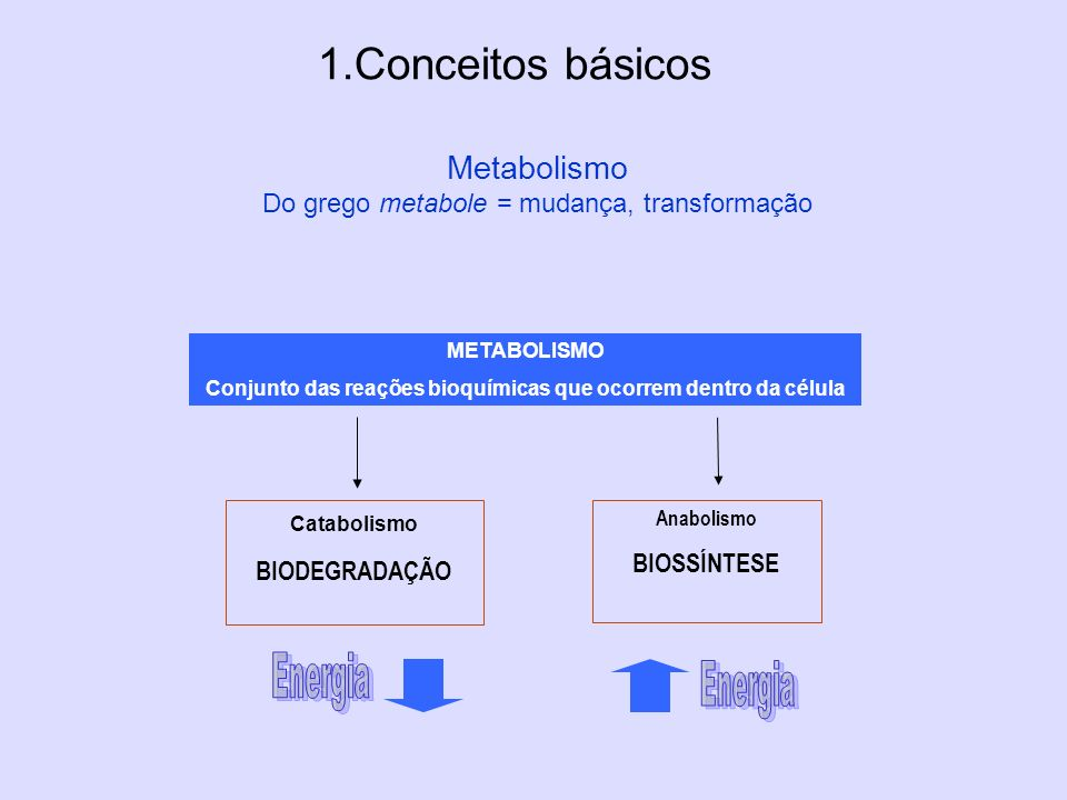 Conjunto das reações bioquímicas que ocorrem dentro da célula