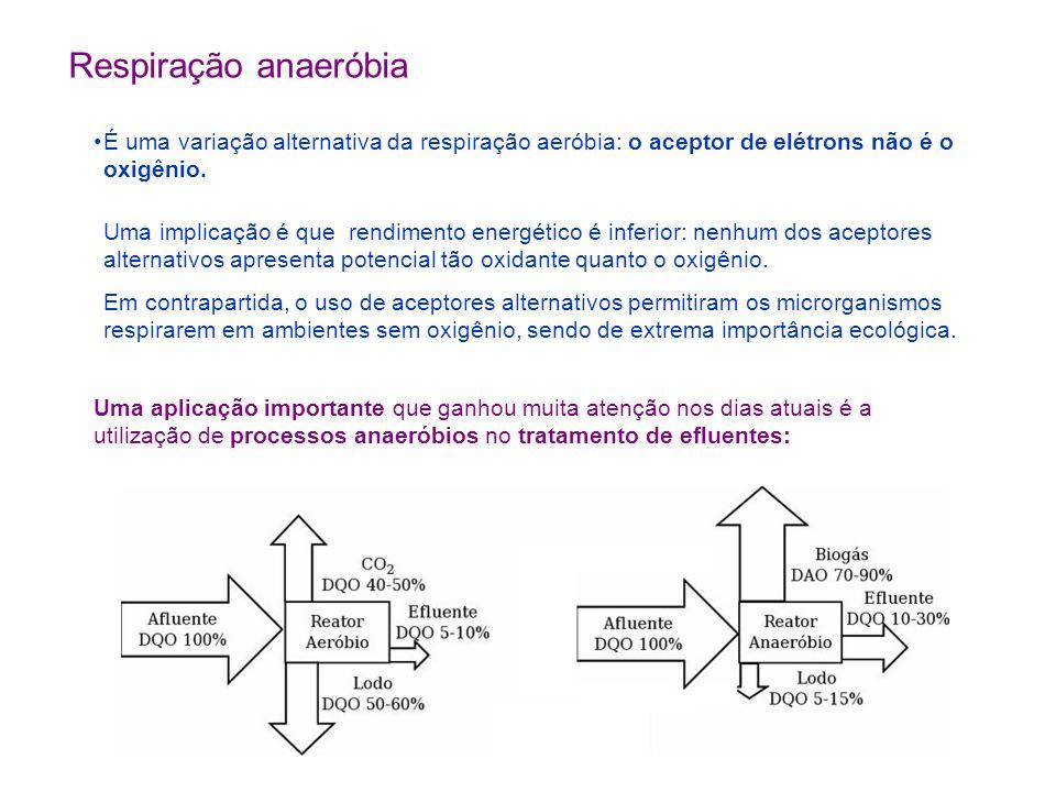 Respiração anaeróbia É uma variação alternativa da respiração aeróbia: o aceptor de elétrons não é o oxigênio.