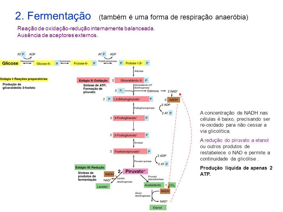 2. Fermentação (também é uma forma de respiração anaeróbia)