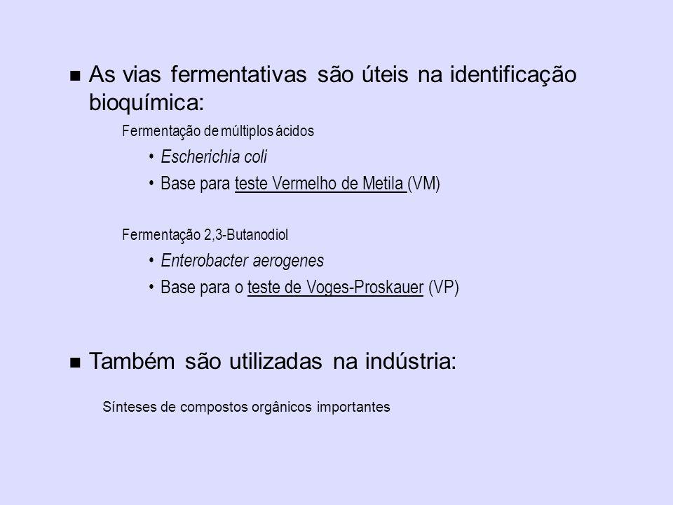 As vias fermentativas são úteis na identificação bioquímica: