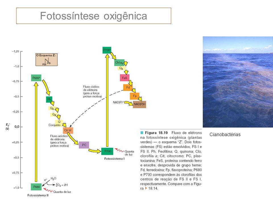 Fotossíntese oxigênica
