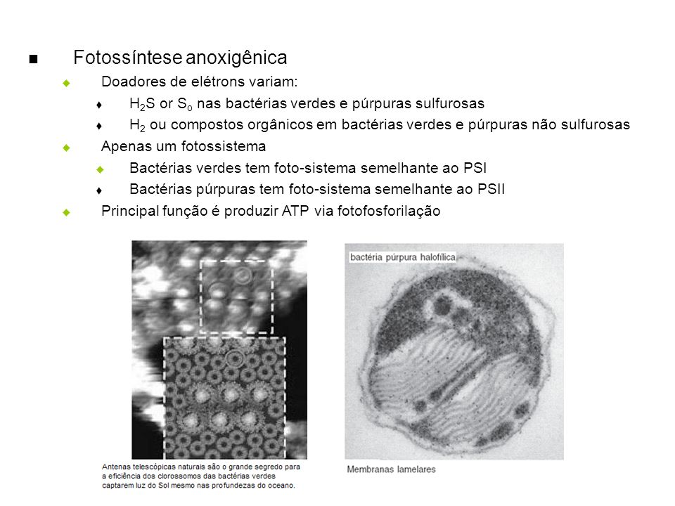 Fotossíntese anoxigênica