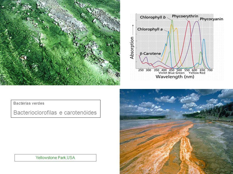 Bacterioclorofilas e carotenóides