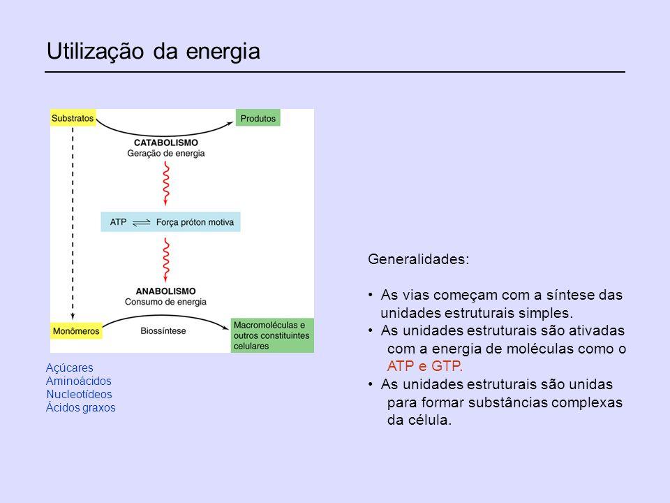 Utilização da energia Generalidades: As vias começam com a síntese das