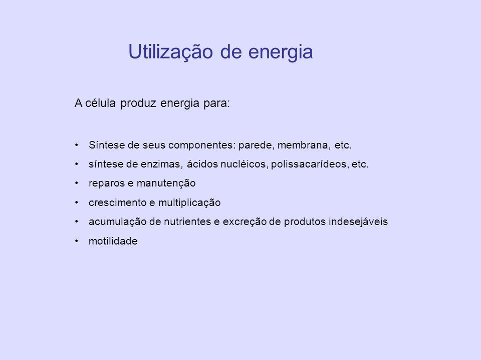 Utilização de energia A célula produz energia para: