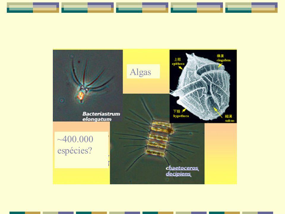 Algas ~400.000 espécies