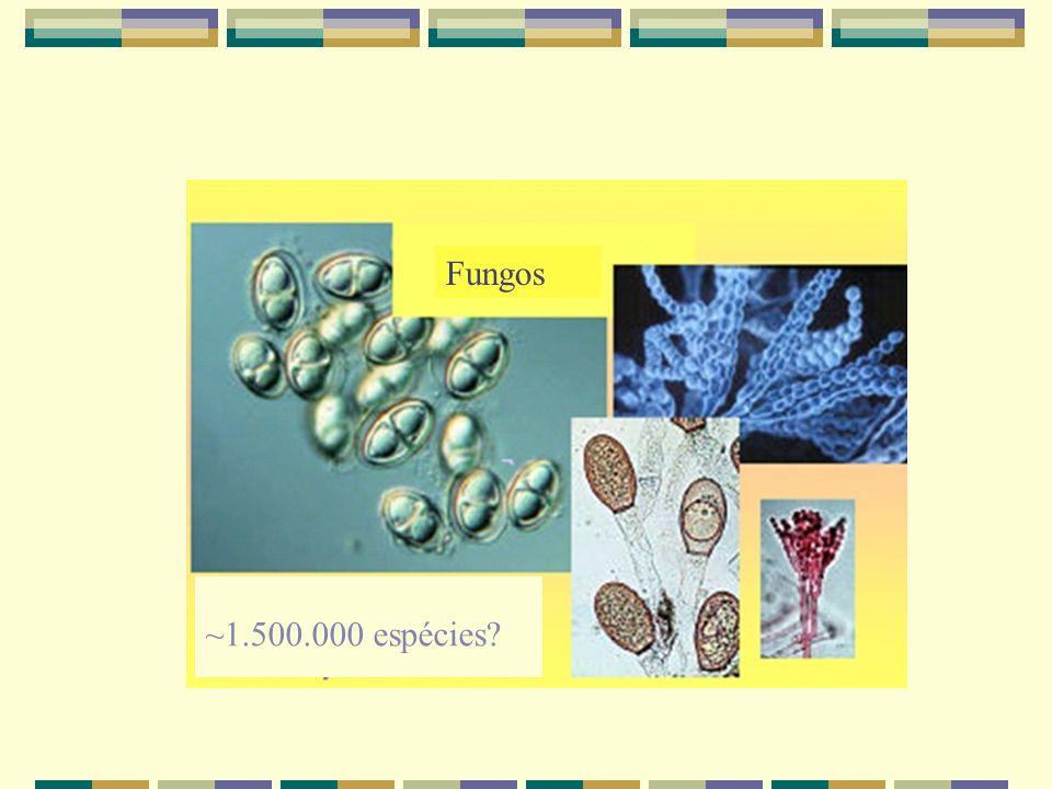 Fungos ~1.500.000 espécies