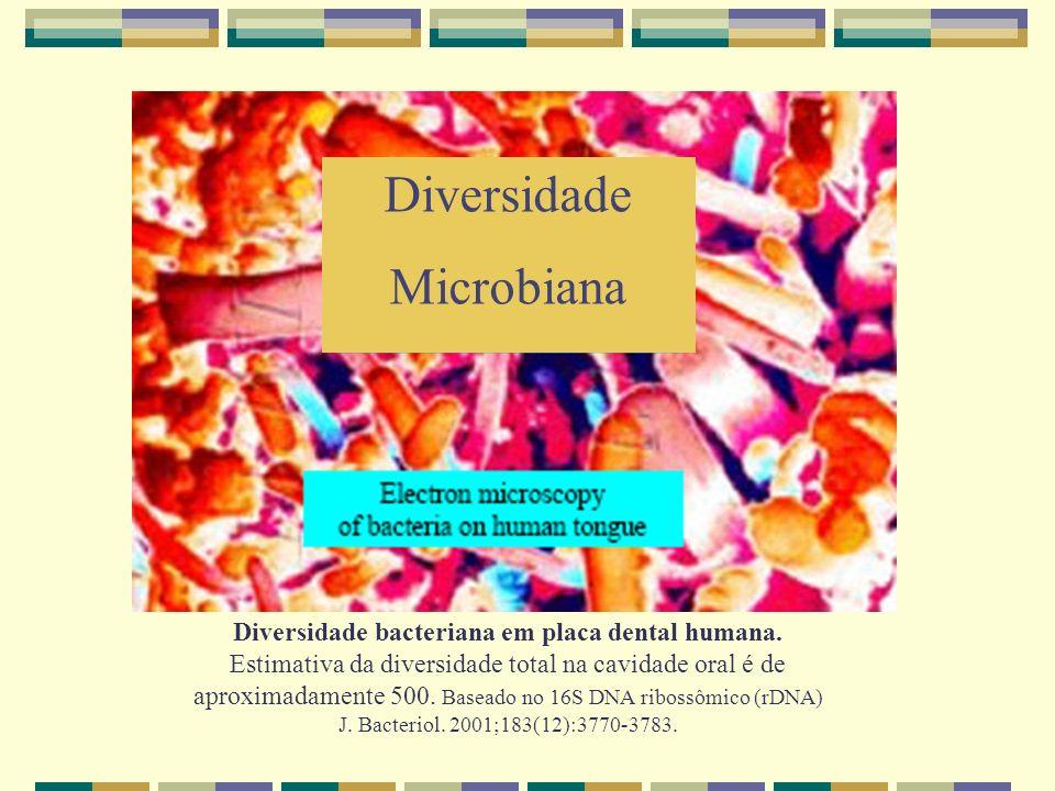 Diversidade bacteriana em placa dental humana.