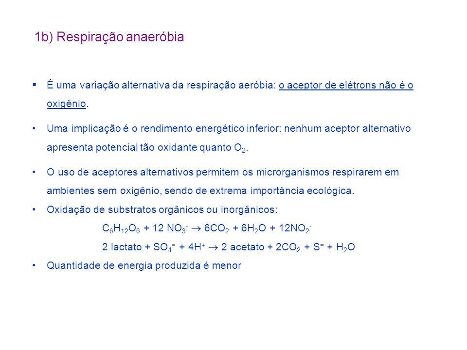 1b) Respiração anaeróbia
