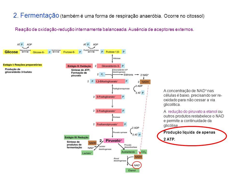 2. Fermentação (também é uma forma de respiração anaeróbia
