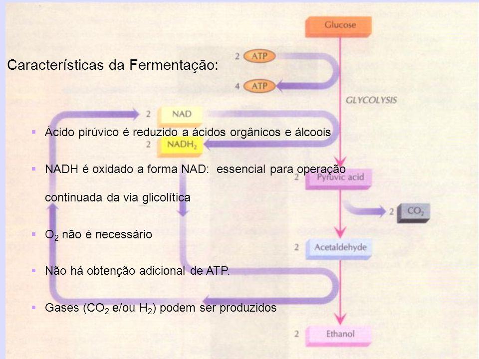 Características da Fermentação: