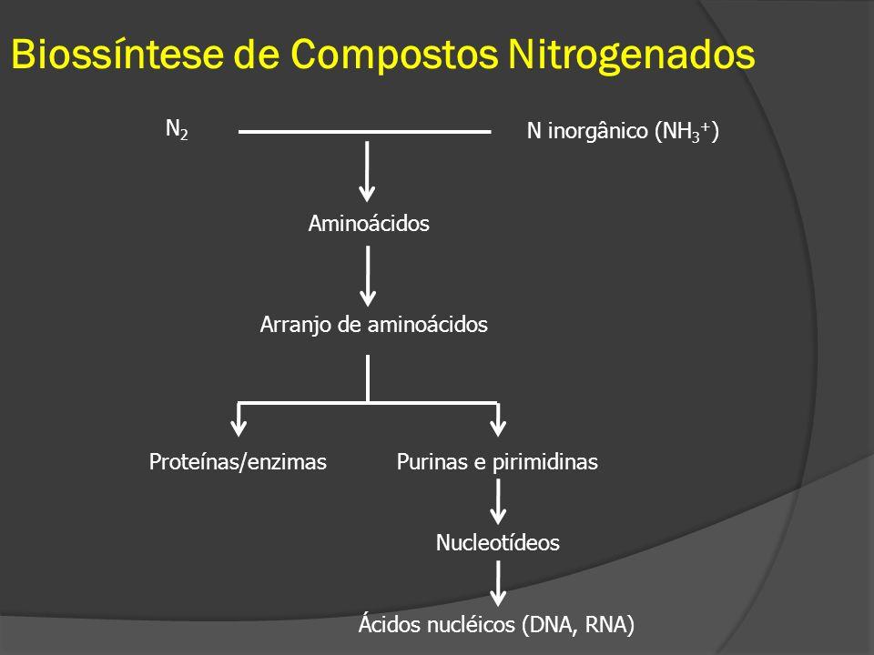 Biossíntese de Compostos Nitrogenados