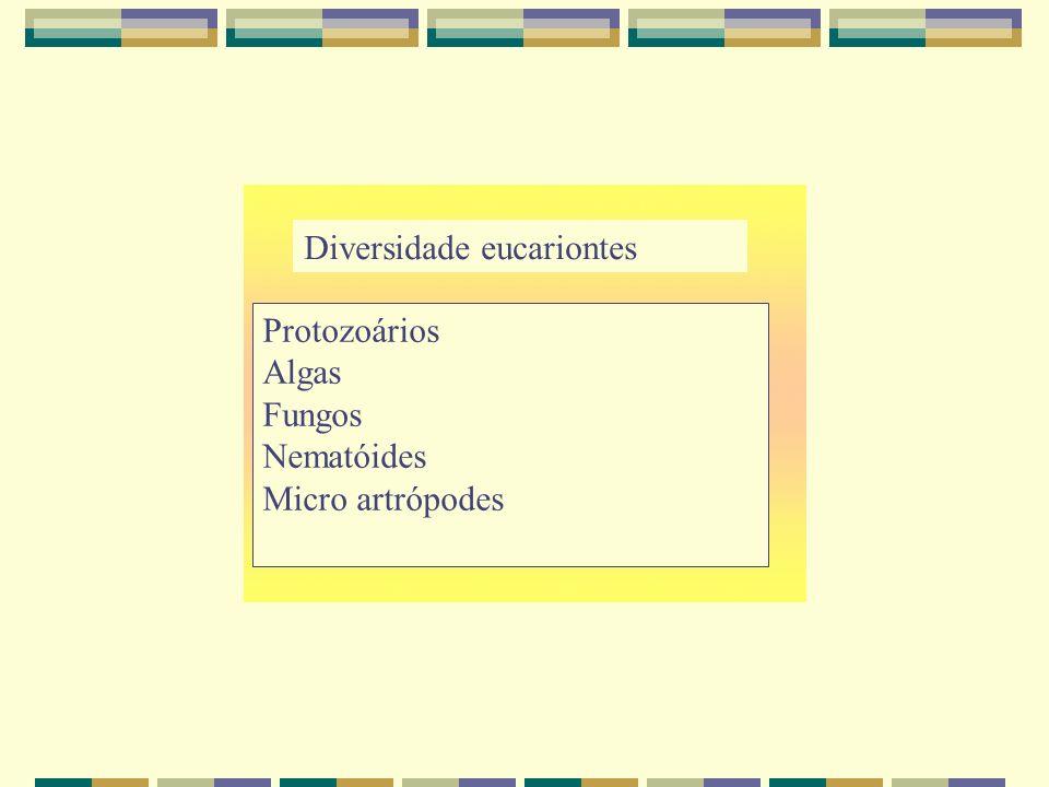 Diversidade eucariontes