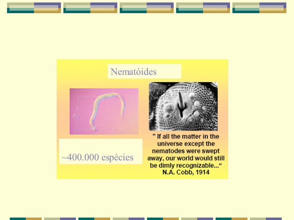 Nematóides ~400.000 espécies