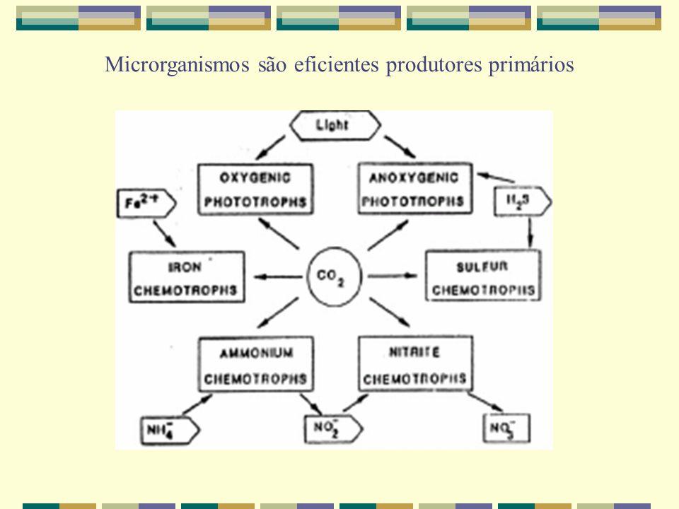 Microrganismos são eficientes produtores primários
