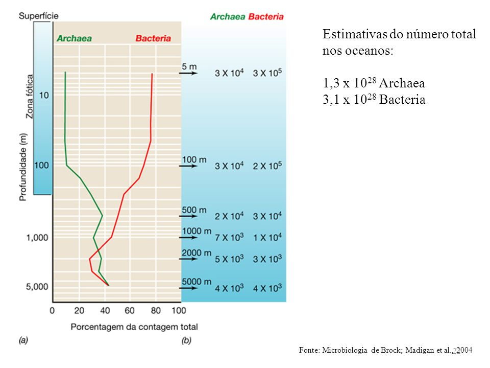 Estimativas do número total nos oceanos: 1,3 x 1028 Archaea