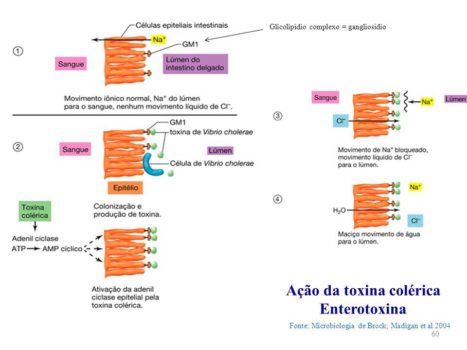 Ação da toxina colérica