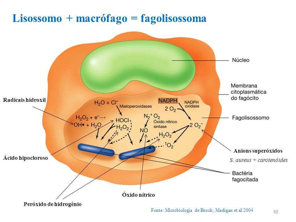 Lisossomo + macrófago = fagolisossoma