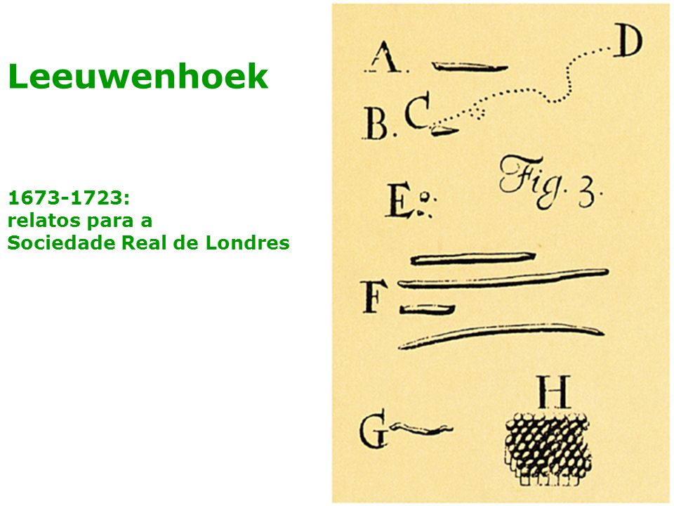 Leeuwenhoek 1673-1723: relatos para a Sociedade Real de Londres