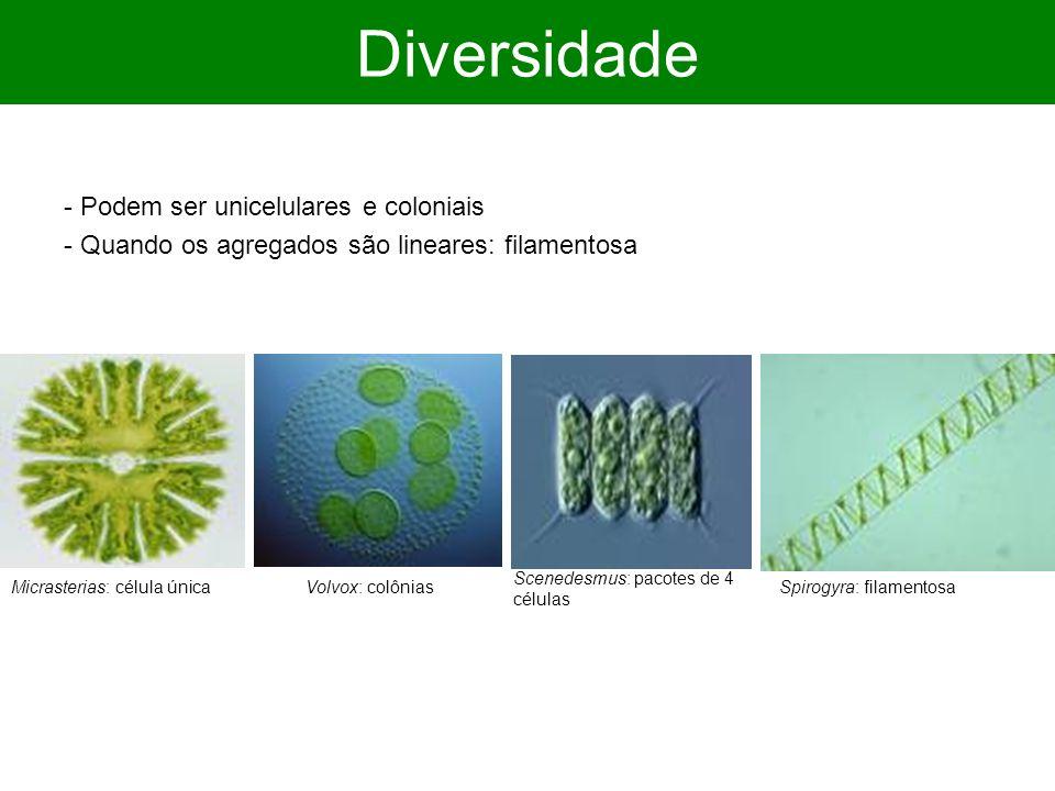 Diversidade - Podem ser unicelulares e coloniais