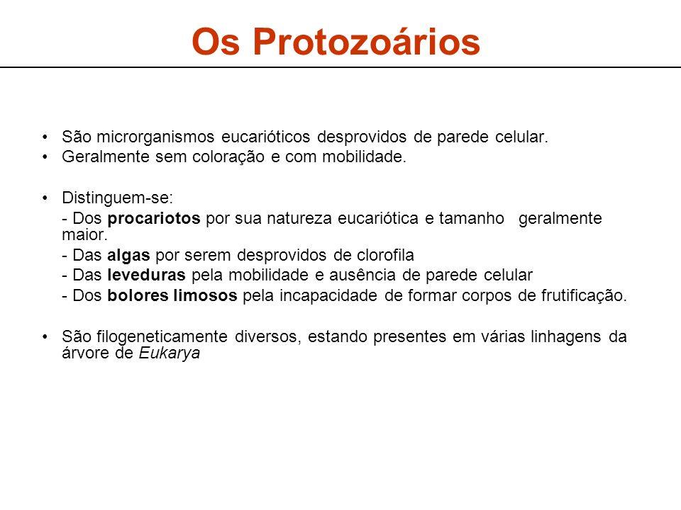 Os ProtozoáriosSão microrganismos eucarióticos desprovidos de parede celular. Geralmente sem coloração e com mobilidade.