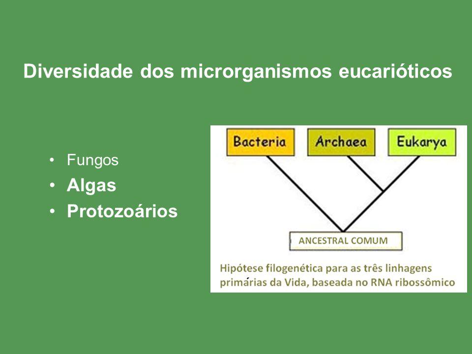 Diversidade dos microrganismos eucarióticos