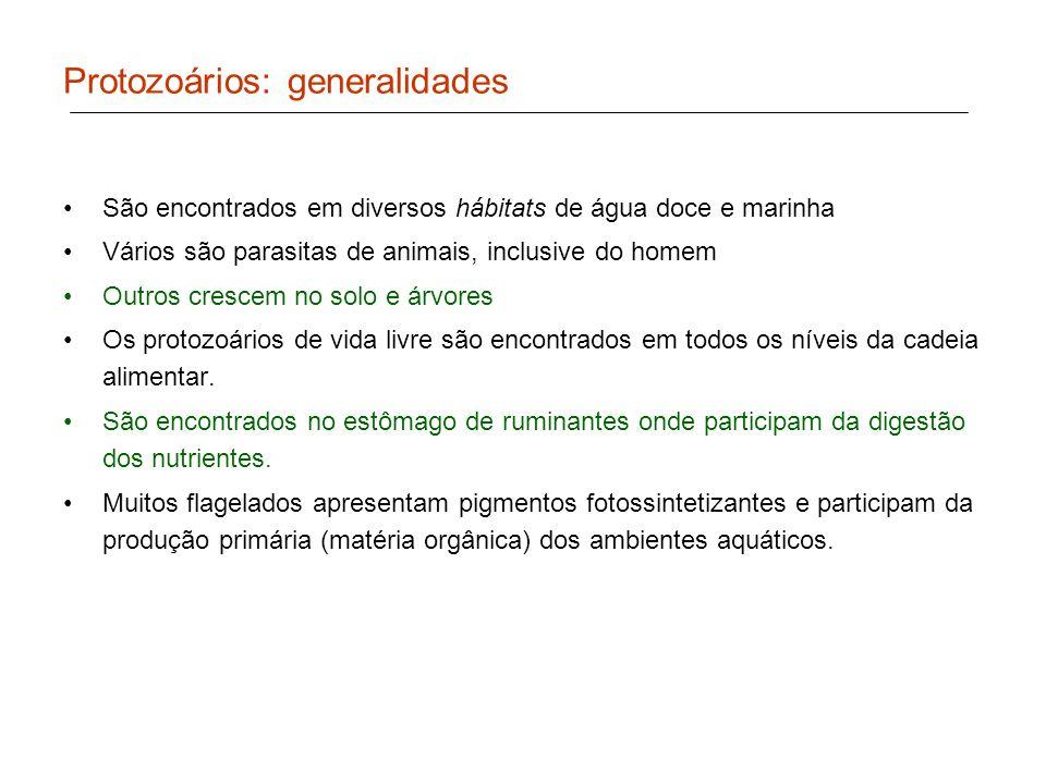 Protozoários: generalidades