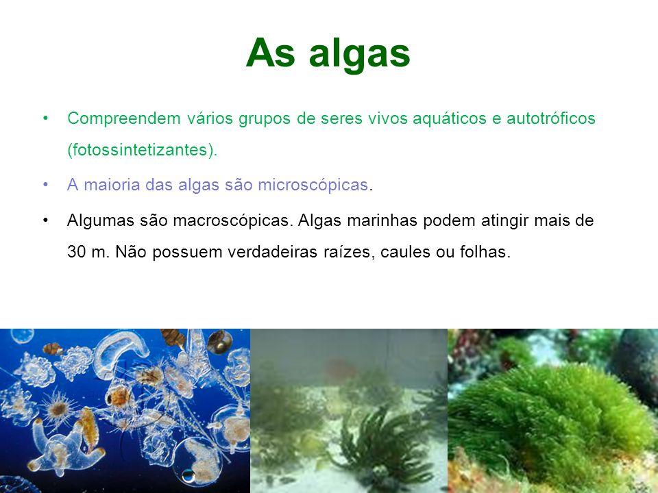 As algas Compreendem vários grupos de seres vivos aquáticos e autotróficos (fotossintetizantes). A maioria das algas são microscópicas.
