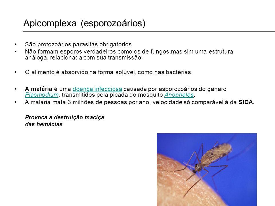 Apicomplexa (esporozoários)