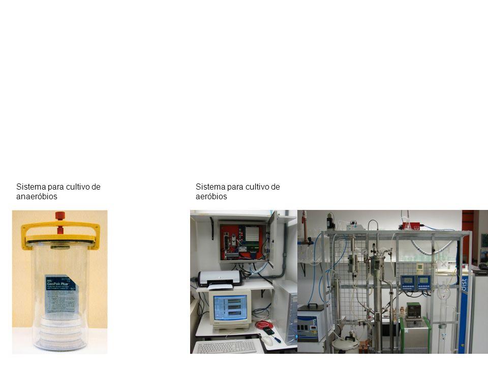 a b Sistema para cultivo de anaeróbios