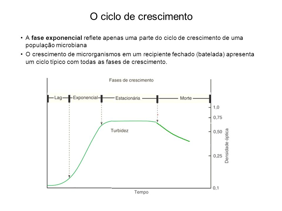 O ciclo de crescimento A fase exponencial reflete apenas uma parte do ciclo de crescimento de uma população microbiana.