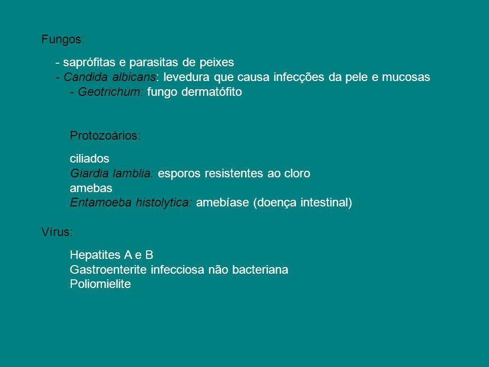 Fungos:- saprófitas e parasitas de peixes. - Candida albicans: levedura que causa infecções da pele e mucosas.