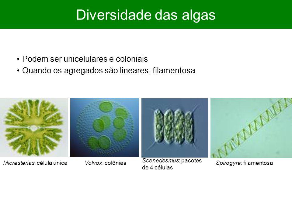 Diversidade das algas Podem ser unicelulares e coloniais